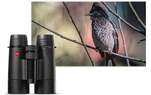 binoculars reviews
