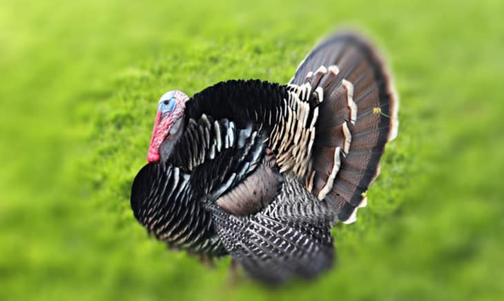 Top 10 Turkey Hunting Tips