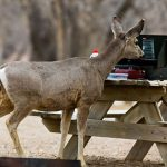 Top 10 Best Deer Attractant (Mar. 2020): Review & Buyer's Guide