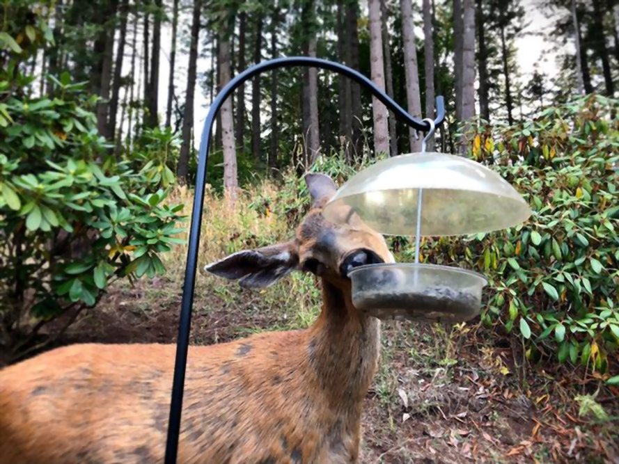 How to Hang a Deer Feeder