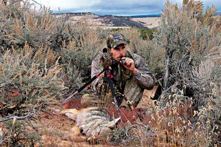 best coyote calls buying guide
